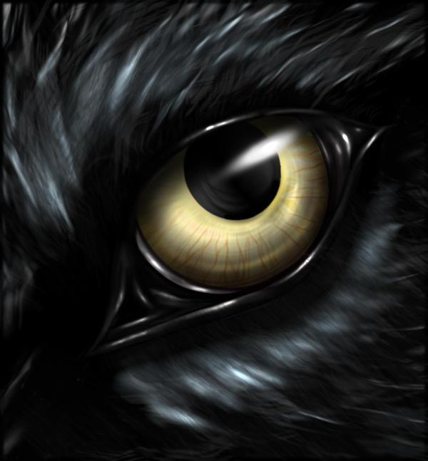 Wolf eyes in dark - photo#8