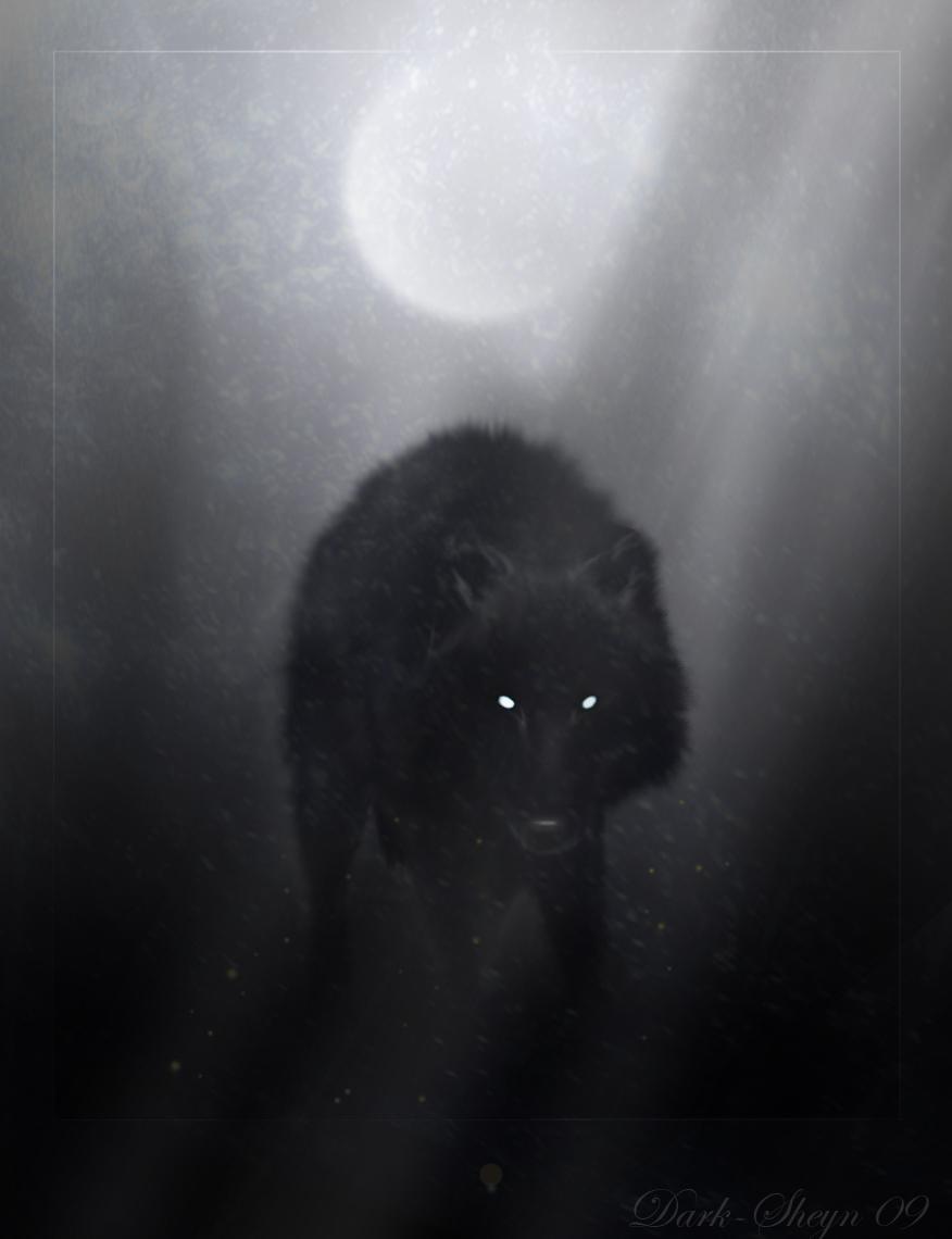 Wolf eyes in dark - photo#14
