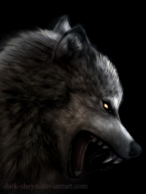 Wolf Tutorial by Dark-Sheyn