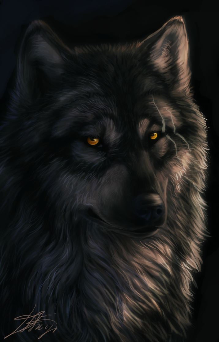 Wolf by Dark-Sheyn