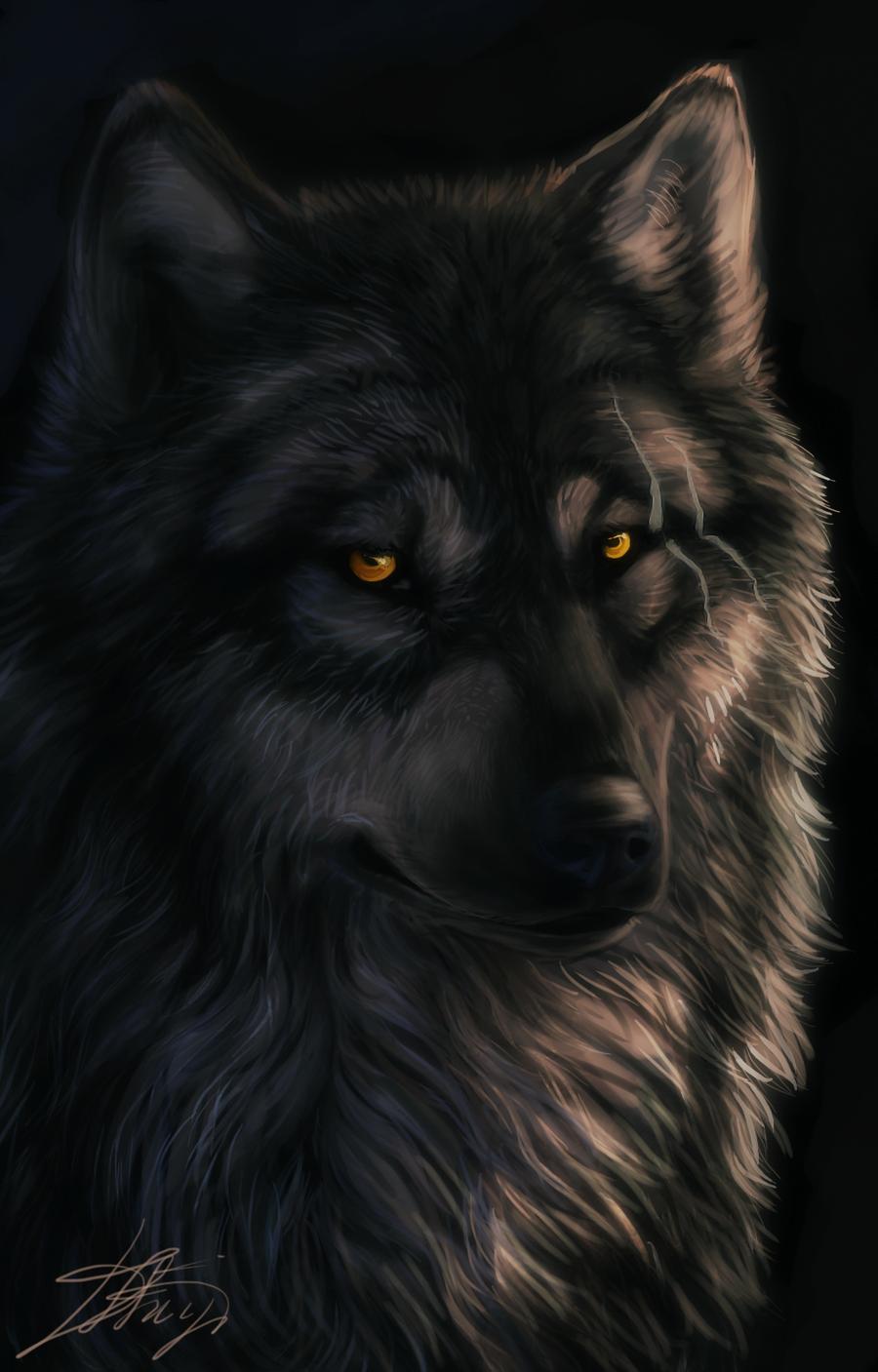 Wolf by Dark-Sheyn
