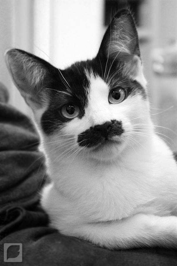 Mr. Moustache by FabianaSilva