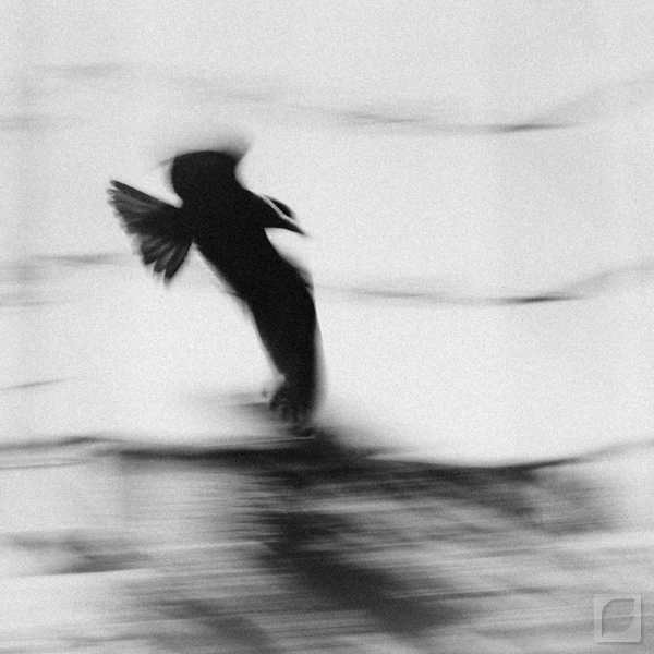 The Flight II by FabianaSilva