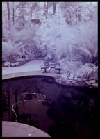 Backyard by davethelurker
