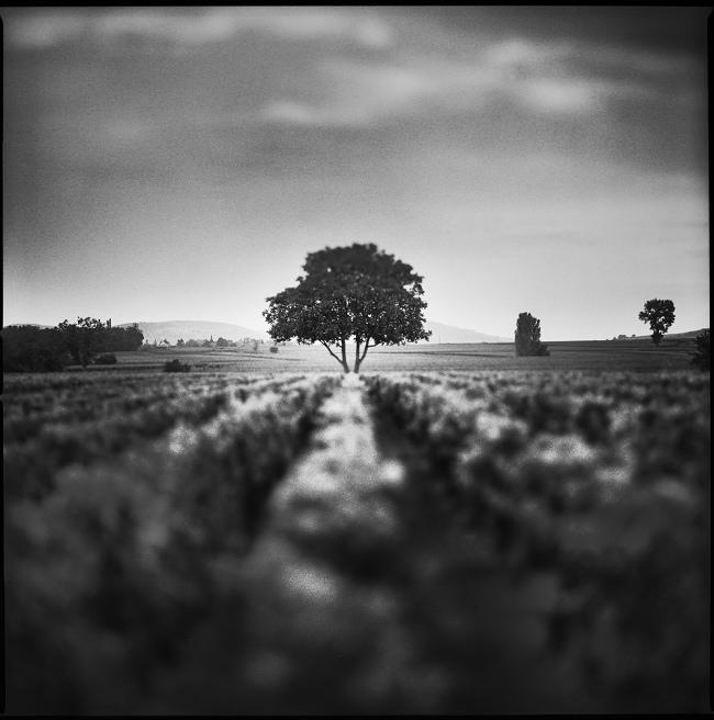 Meursault by yup12