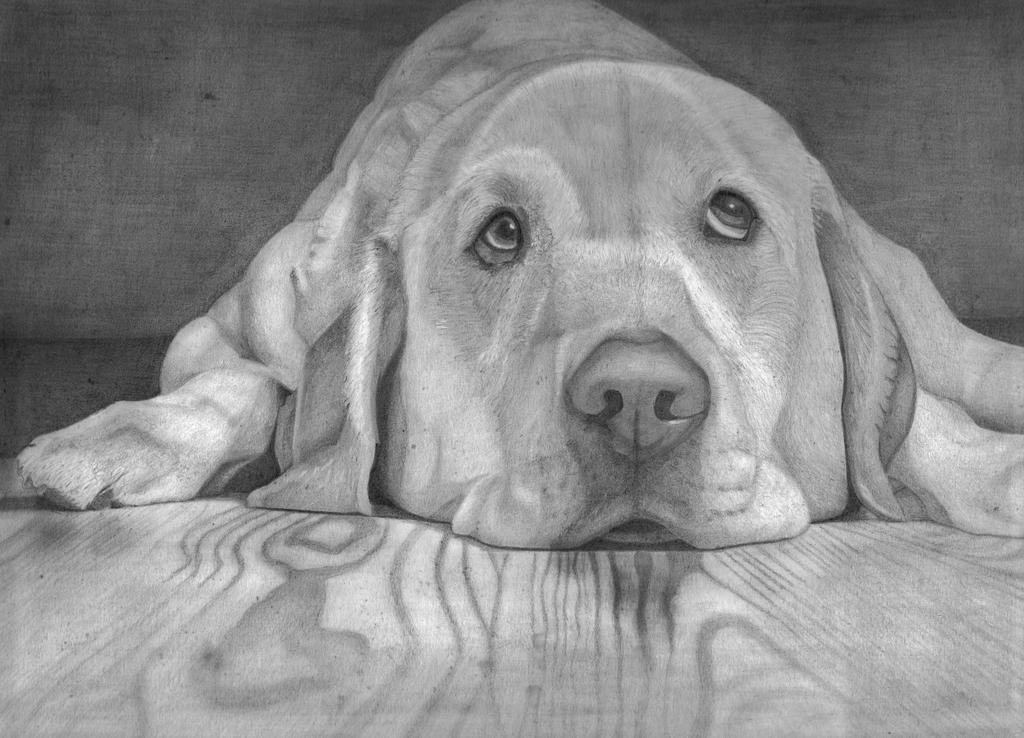 Labrador retriever (Pencil) by mchurchill1982