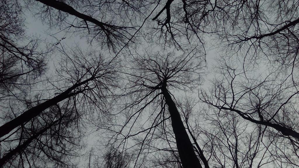 Tree crown by Miakan07