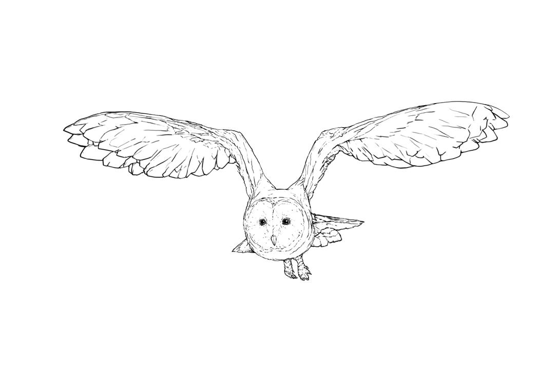 Owl by AlexanderCrW