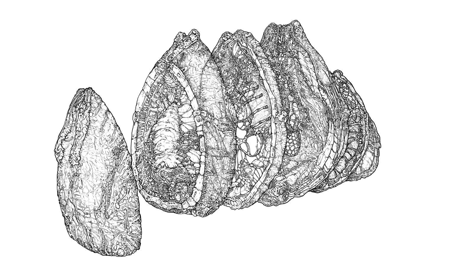 Xenomorph's Egg Sliced by AlexanderCrW on DeviantArt