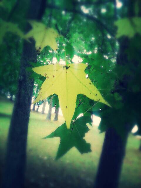 leaf on the forest by Atom45