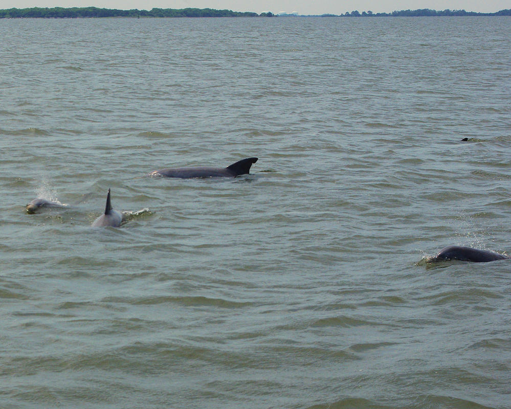 images of dolphins playing - photo #42