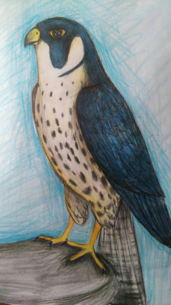 A Falcon.... :) by FeatherFox19