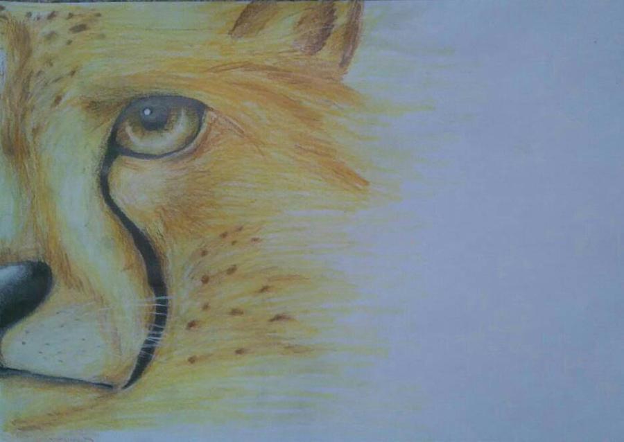 The Ceetah by FeatherFox19