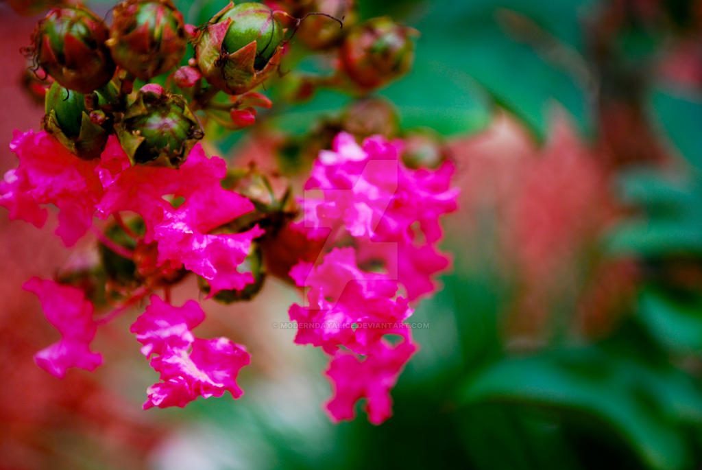 Pink Flowers in a Garden by ModernDayAlice