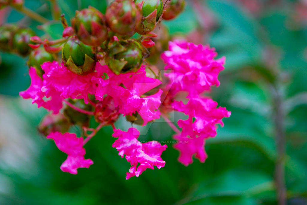 Pink Flowers in a Garden 2 by ModernDayAlice