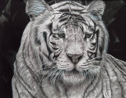 White Tiger by MaAnMujunkie