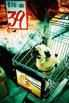 pug in shopping cart
