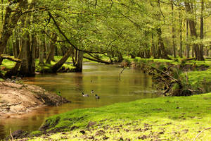 Forest River 1 by landkeks-stock