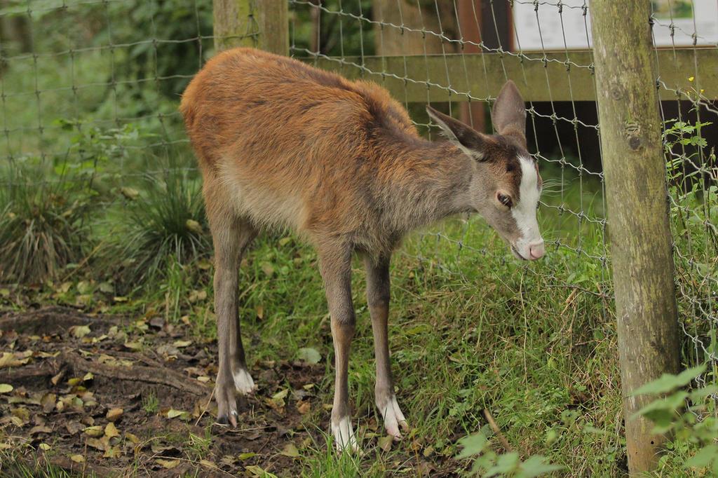 Red Deer 11 by landkeks-stock