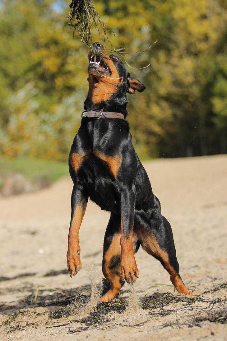 Dog 1 by landkeks-stock