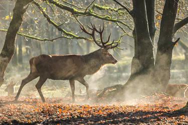 Red Deer 13 by landkeks-stock