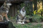 Wolf Pose 27