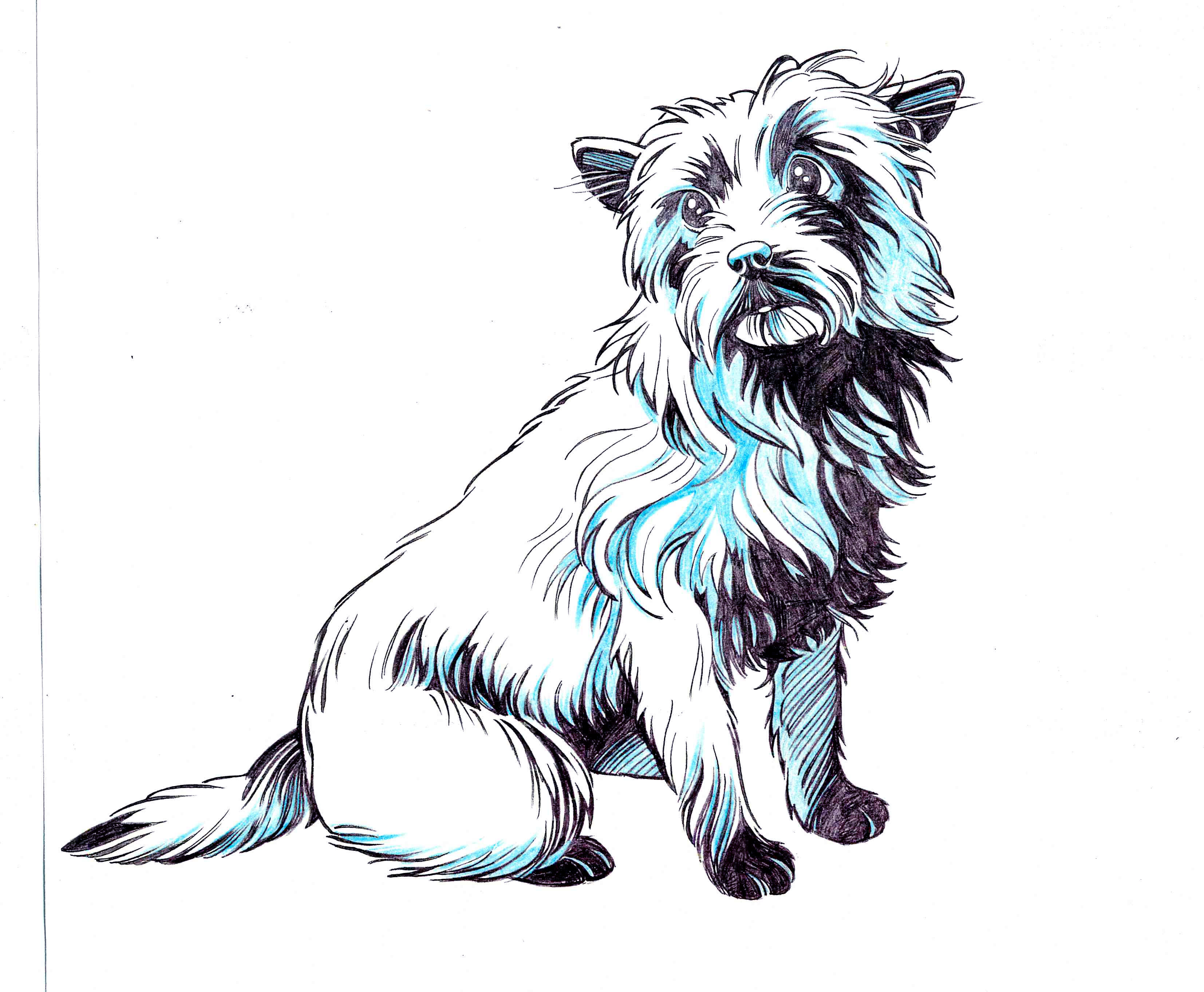 toto coloring pages - photo#16