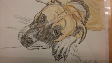 Austin the dog by ebrolic
