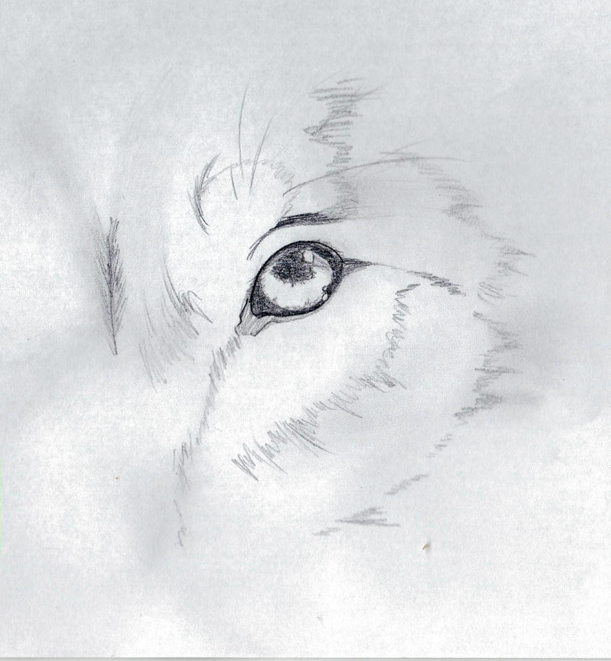 Wolf Eye Pencil Contrasted by AnimeDevil99 on DeviantArt