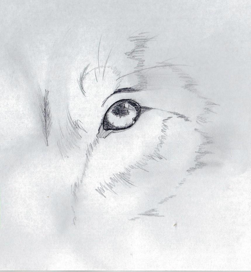 Wolf Eye Pencil Drawing