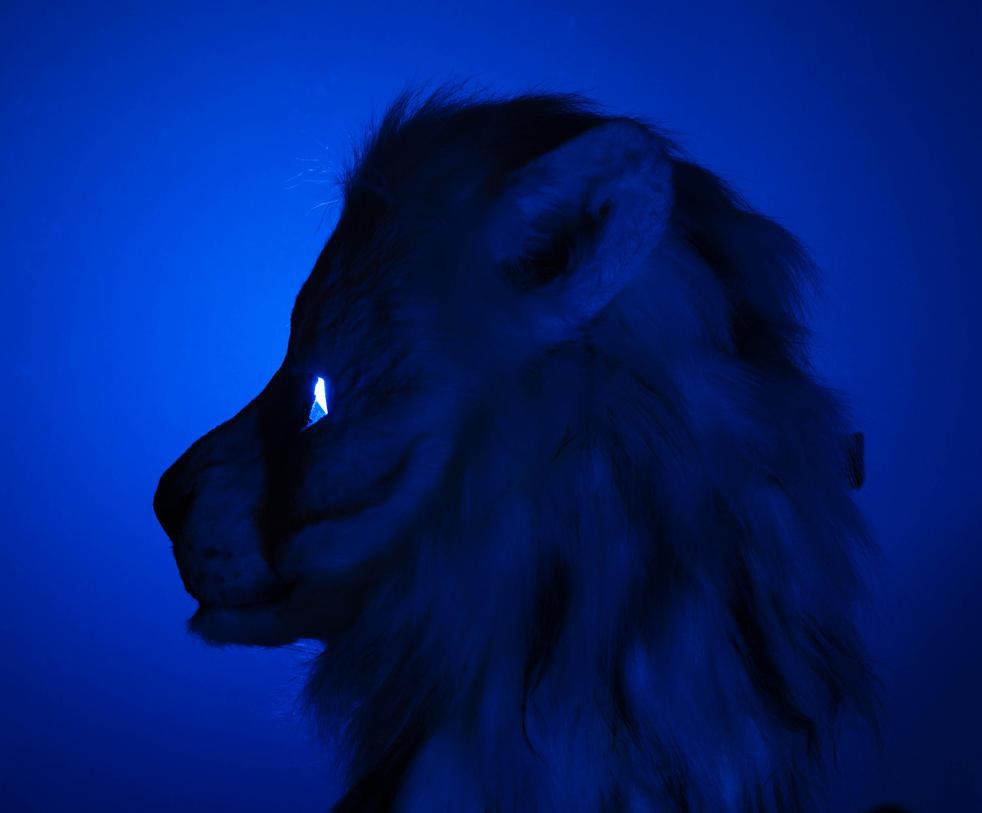 Bora In Blue by Derecho