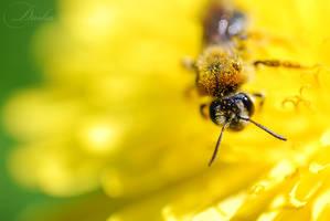 dandeloin and bee....