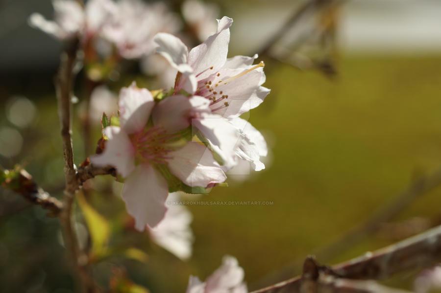 Spring by xFarrokhBulsarax