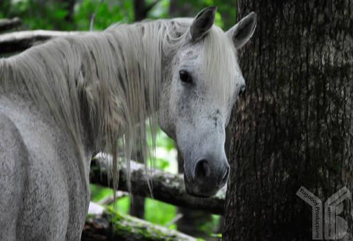 Smokies-Horse