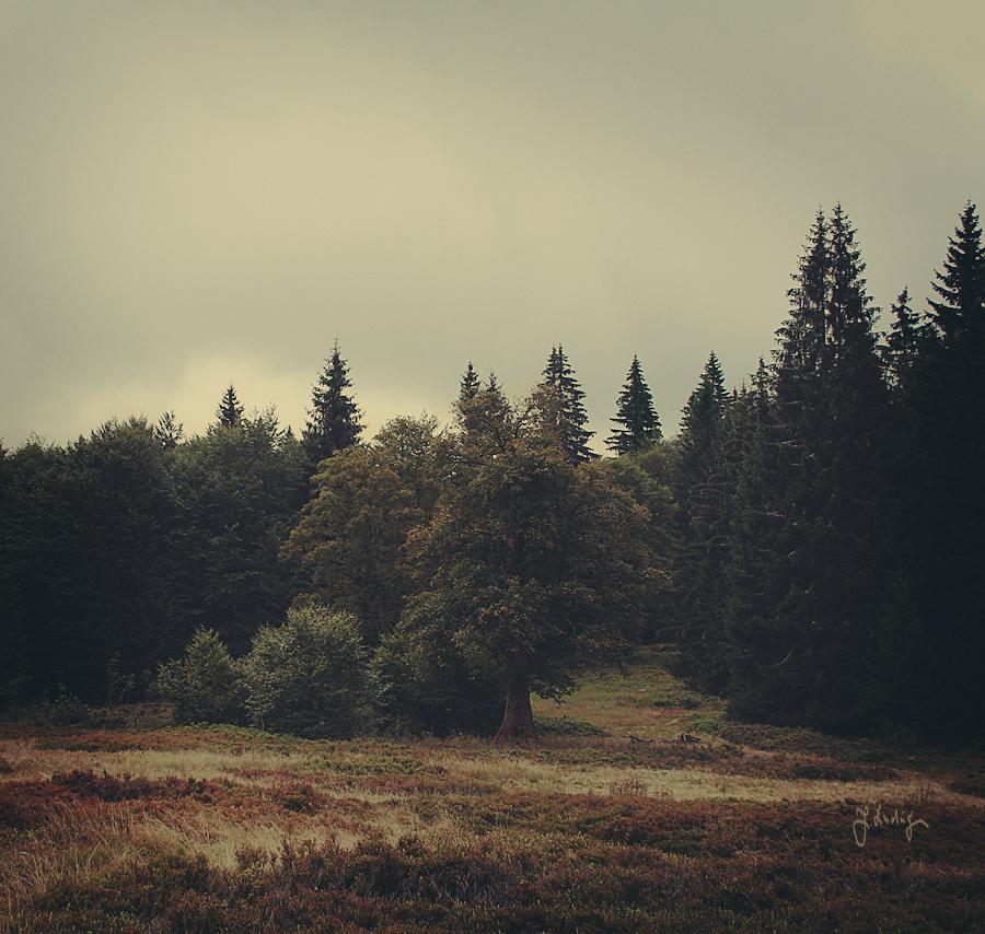 Die Herbstwiese by Knechter