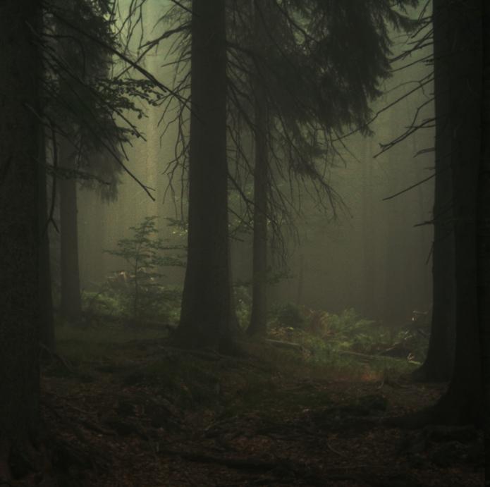 Waldheimat by Knechter
