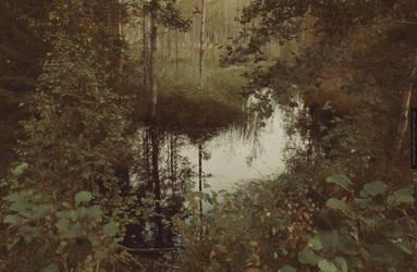 Moorbirken by Knechter