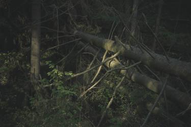 Unterholz by Knechter