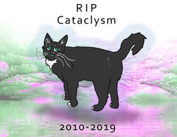 Cataclysm the Cat Tribute