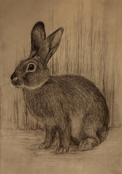 rabbit sketch by moussee on DeviantArt