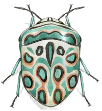 Picasso Bug by moussee