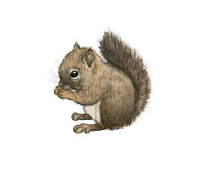 Squirrel by moussee