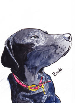 Animal portrait - Commission