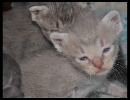 litle cat