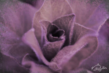 Pretending to be a rose by PigInPJs