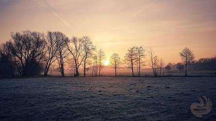 Spring Morning Sun