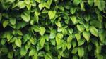 Springtime Greens by VonZeitZuZeit