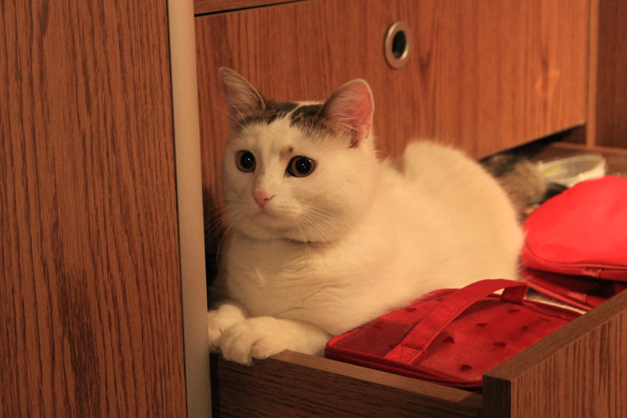 Cat In Drawer Gif