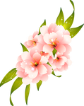 Flower Vector HQ PNG