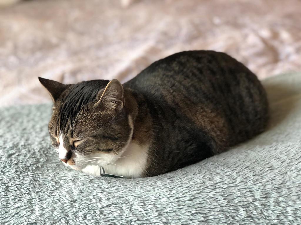 Sleepy Loaf by Kumapaws376